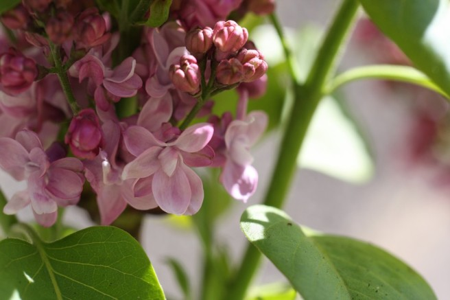 floral, presque nian nian pour célébrer l'arrivée du printemps