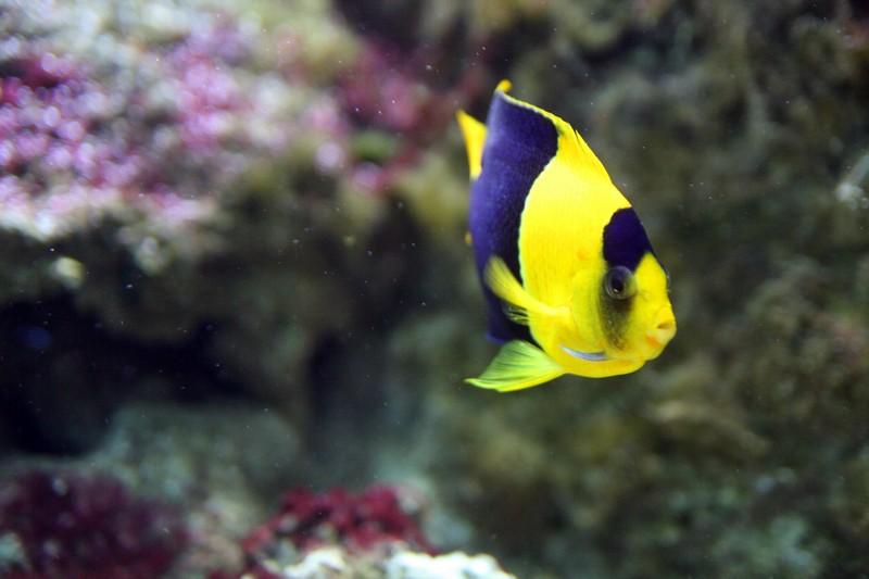 l aquarium de lyon debobrico